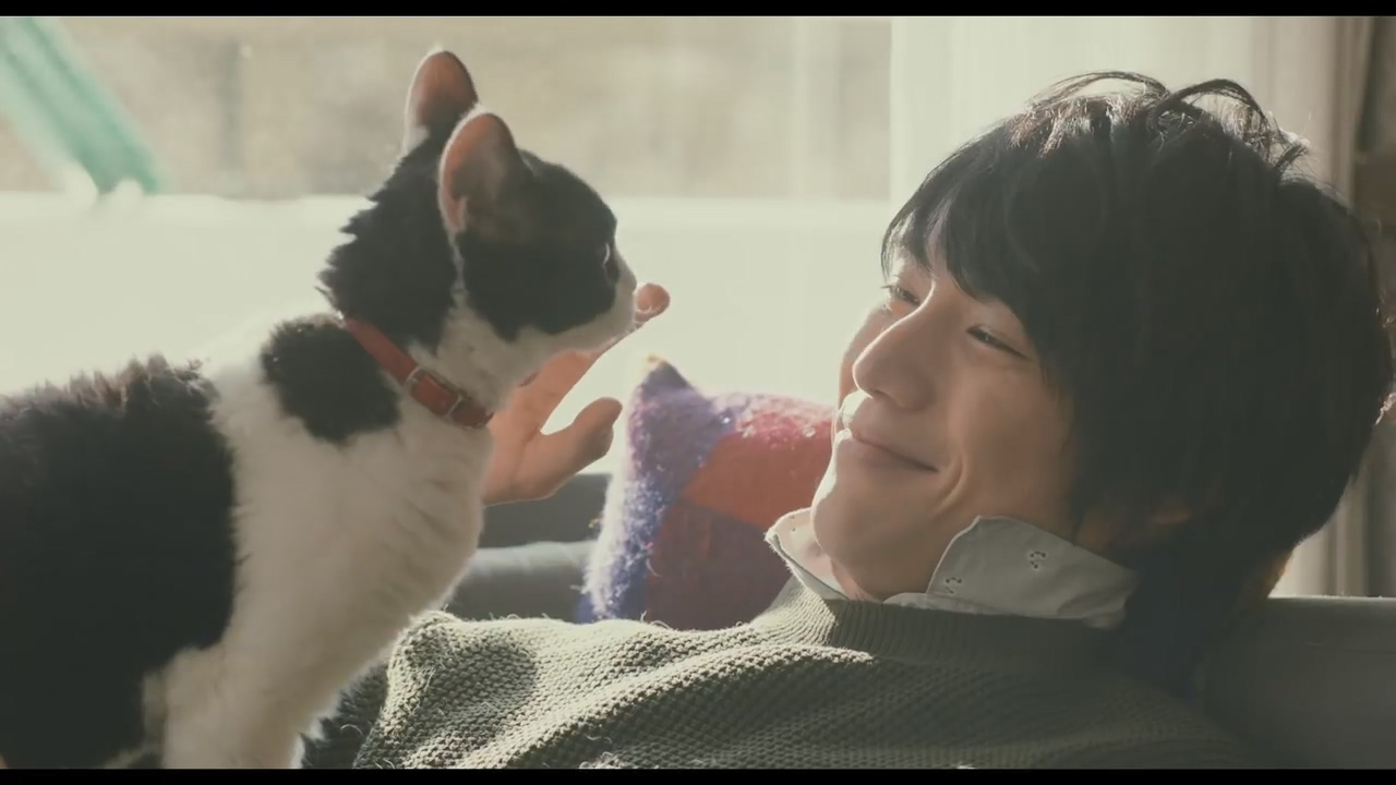 Japanese Film Festival 2018: The Travelling Cat Chronicles will remind you to hug your cat a little tighter